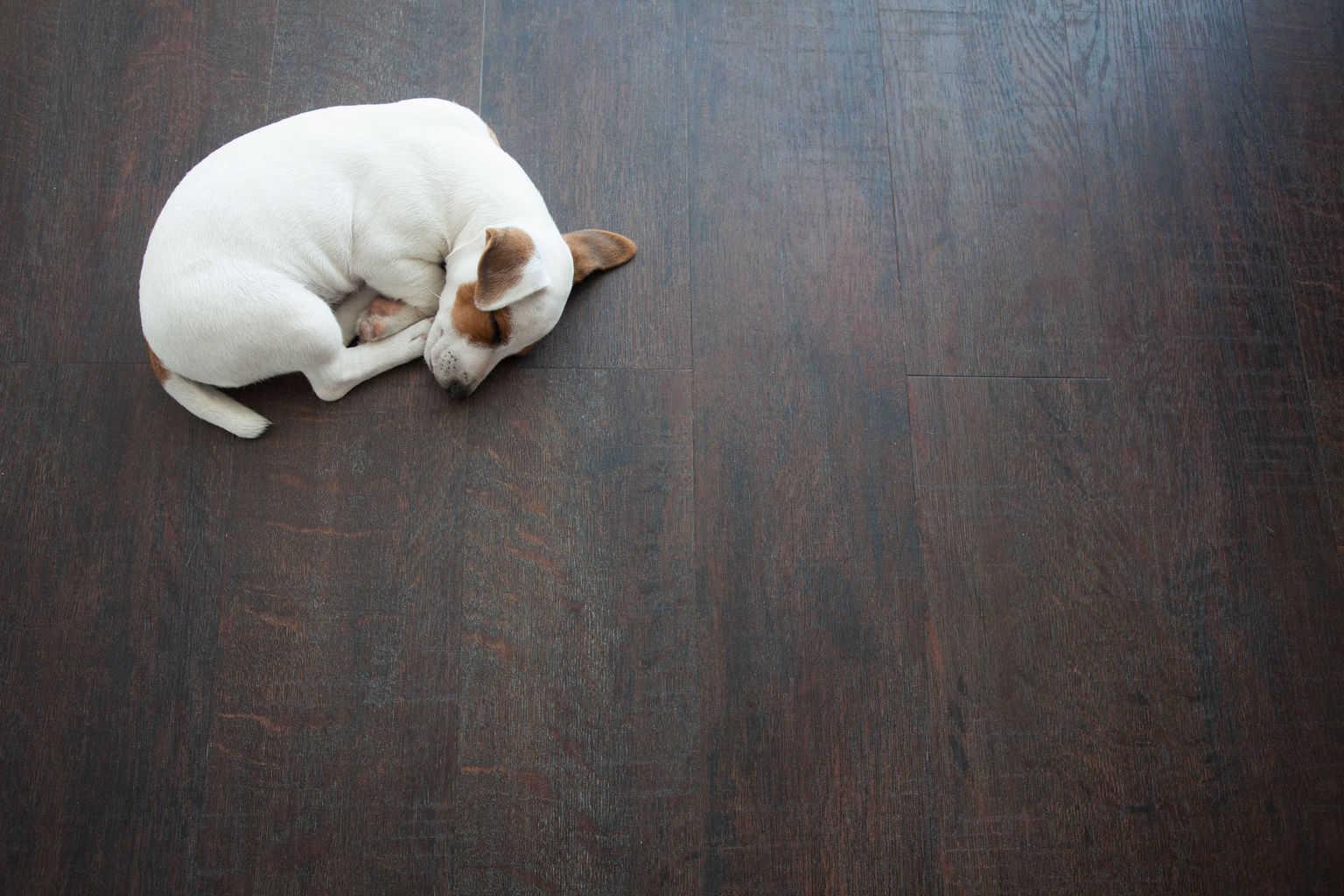 floors buckhead walnut midtown hardwood brazilian flooring products shutterstock atlanta