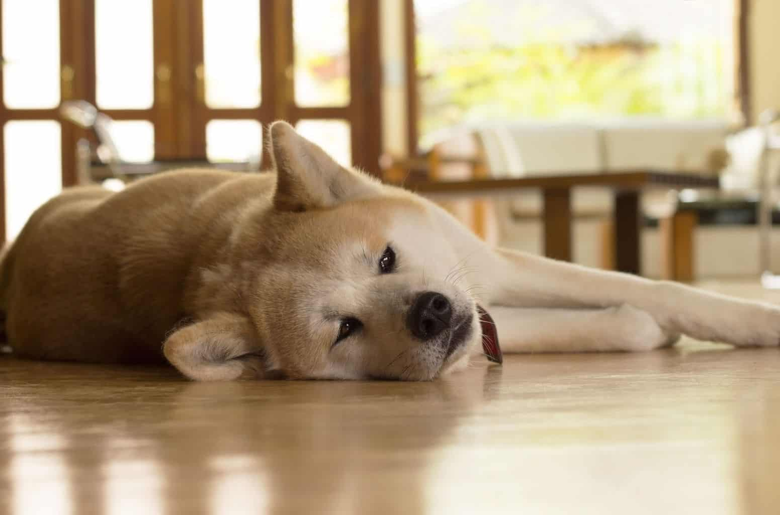 What Are The Best Hardwood Floors For Dogs Pet Friendly